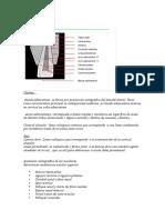 Anatomia Radiografica