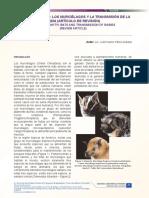 Articulo Desmodus Rotundus