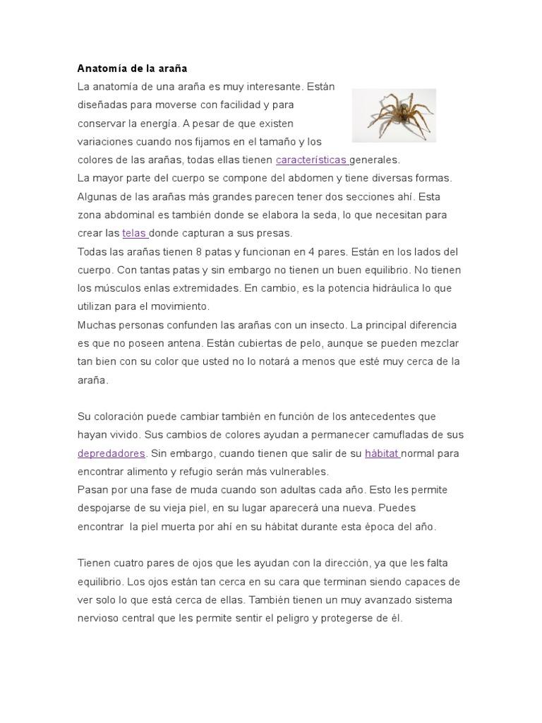 Increíble Anatomía De Una Araña Viuda Negro Cresta - Imágenes de ...