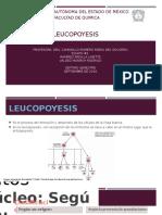Leucopoyesis-1