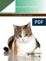 Cat Anatomy.pdf
