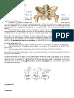 Articulación Coxofemoral