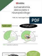 Aula 4 - Neuroanatomia