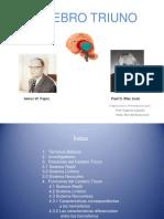 Cerebro Triuno Presentación