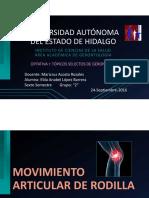 Articulación de Rodilla PDF