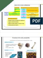 Sales y Compuestos Orgánicos GLUCIDOS, Lípidos, Proteinas
