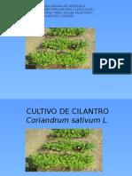 cultivo de cilantro 2016.pptx