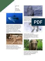 ANIMALES EN PELIGRO DE EXTINCIÓ1.docx