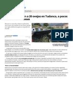 Los Lobos Atacan a 20 Ovejas en Tudanca, A Pocos Metros de Las Casas . Eldiariomontanes