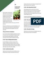 Paprika überwintern – Schritt für Schritt Anleitung