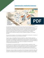 Central de Cogeneración Mediante Biomasa