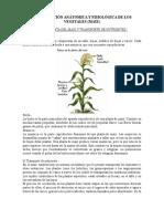 Coordinación Anátomica y Fisiológica de Los Vegetales