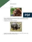 Binatang Asli Indoensia
