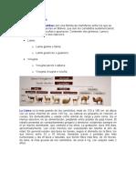 Camélidos en Bolivia.docx