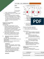 Cardiac Cycle 2