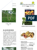 Boletin-Papaya.ppt
