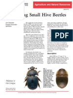 Managing Small Hive Beetles (SHB)
