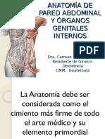 anatoma-pelvica-slideshare