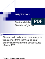 lecture 24- respiration.ppt