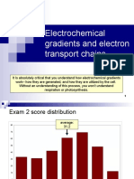 Lecture 21- Electrochemical Gradients and Electron Transport