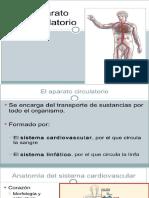 Anatomia Sistema Circulatorio