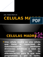 celulasmadre-121118181428-phpapp02