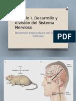 desarrollo embriologico