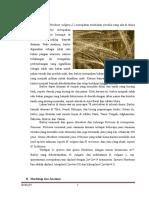 Barley Pengetahuan Bahan