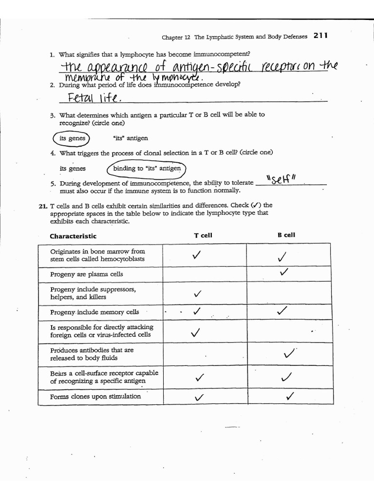 immune system worksheet key