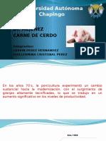 Exposicion Porcino.pptx