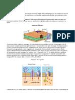 Bioelotrogênese e Sinapses
