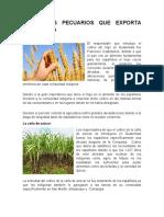 Actividades Agropecuarias Que Se Llevan a Cabo en Guatemala