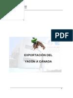 Yacon a Canada
