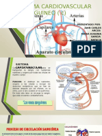 Sistema Cardiovascular y Sanguineo Equi, Paola