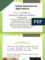 PPT Semilla Botanica G.