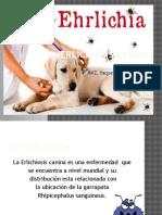 Erlichiosis canina yaqueline.pptx