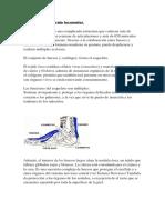 Anatomía Del Aparato Locomotor