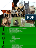 Aparato Digestivo Rumiantes 1208675153757785 8