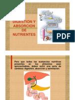 3Absorcion y Digestion