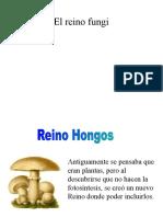 6 Reino Fungi