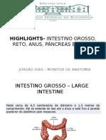 Anatomia - Highlights- Intestino Grosso, Reto, Anus,