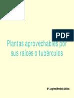 PLantas Con Tubérculos Comestibles