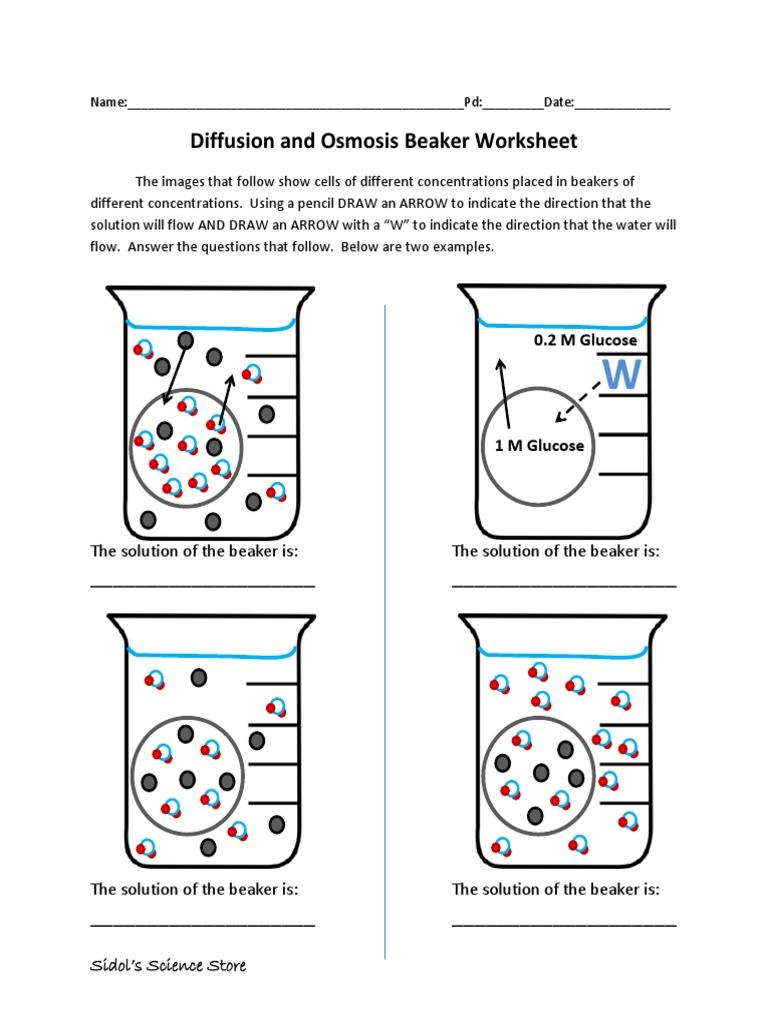 Osmosis and Diffusion Worksheet – Diffusion and Osmosis Worksheet