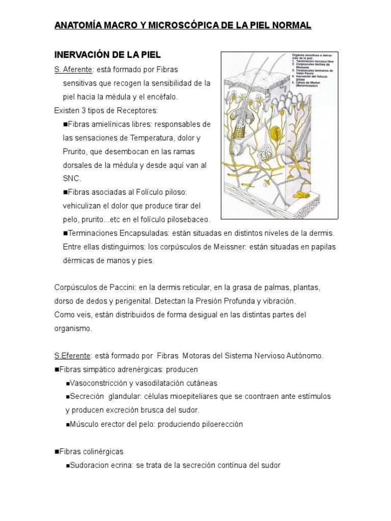 Anatomia Piel
