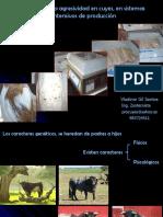 3. MANEJO DE LA AGRESIVIDAD EN CUYES.pdf