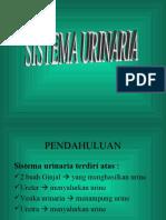 Anrad i Tr Urinarius1