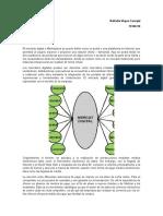mercados digitales.docx