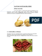 Plantas Nativas Del Peru