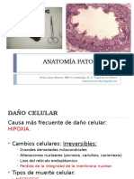 Anatomia Patologica 1vuelta
