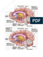 cerebro mio.docx